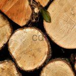 kayu12