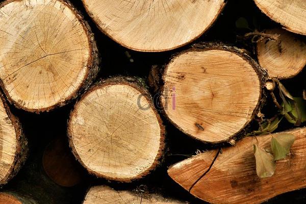 kayu13