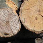 kayu17