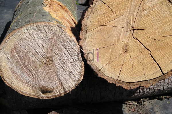 Harga murah kayu jati terbesar area Petamburan Jakarta
