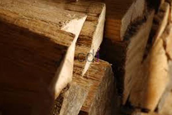 kayu20