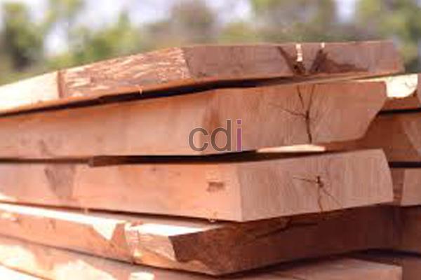 kayu22
