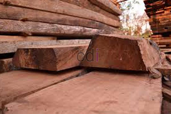 kayu23