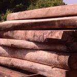 kayu24