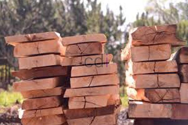 Lokasi Penjualan kayu sengon merah di Pamoyanan Bogor 1
