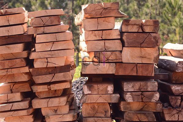 Harga murah kayu jati abangan di Maphar Jakarta
