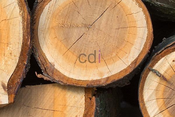 kayu45