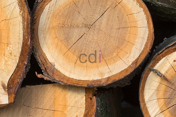 Harga per batang kayu jati per kubik wil Cibodas Tangerang 1