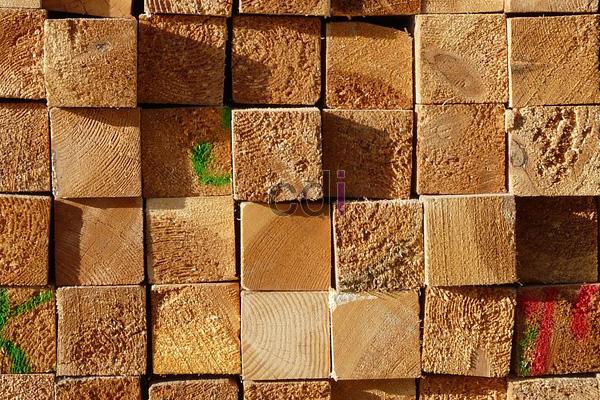 kayu7