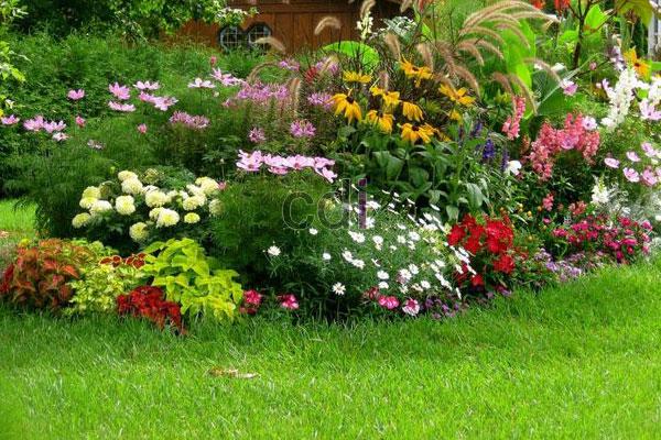 Layanan Pembuatan tanaman hias depan rumah