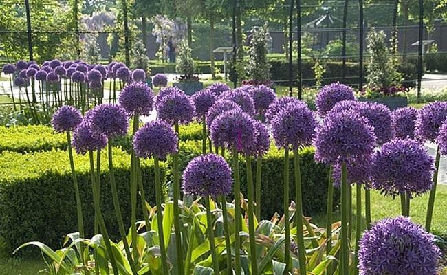 Viral 5 tanaman hias yang permintaan konsumen stabil