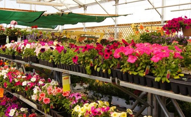 Tren 3 jenis tanaman hias dan karakteristiknya